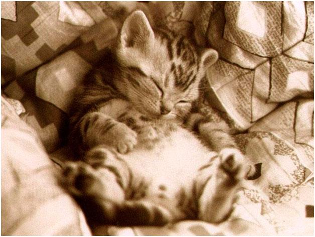Даешь сладкий сон